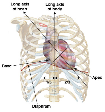Anatomy Tutorial - Anterior | Atlas of Human Cardiac Anatomy