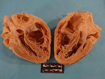 Comparative Anatomy Tutorial - External Anatomy